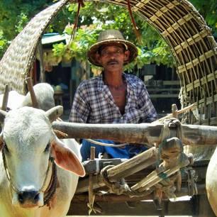 Myanmar-Monywa-ossenwagen(8)