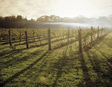 Australie-Hunter-Valley-wijngaarden_1_560499