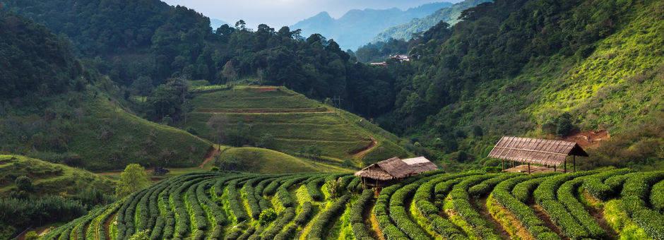 De Cameron Highlands in Maleisië