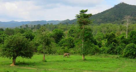 Azie-Thailand-Pranburi-olifant2