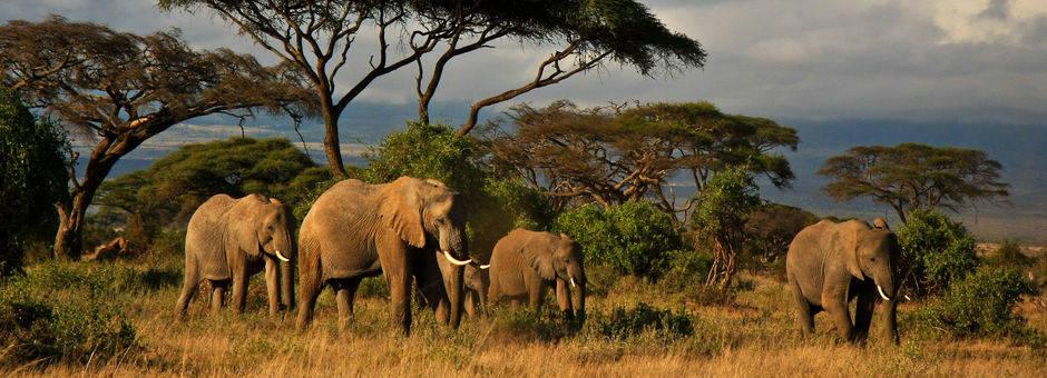 Kenia-Amboseli-Olifanten1