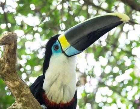 Tambopata-Vogel