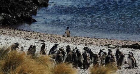 Peninsula-Valdes-Pinguins2_1_402108