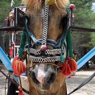 Gili-eilanden-paard