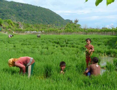 kinderen-rijstvelden-Sumbawa_1