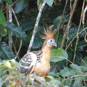 Spot de verschillende dieren in Madidi National Park - Bolivia