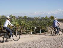 Fietsen tussen de wijngaarden