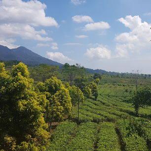 Java-Bandung-Theevelden