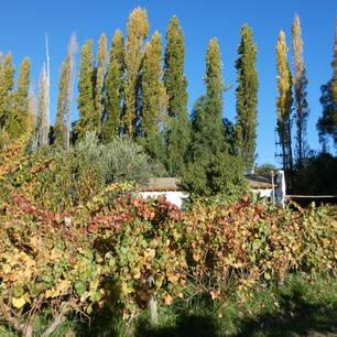 Argentinie-Mendoza-wijnboerderij-2