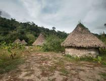 Inheemse Kogui-stam