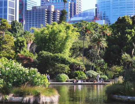 Australie-Sydney-botanische-tuin