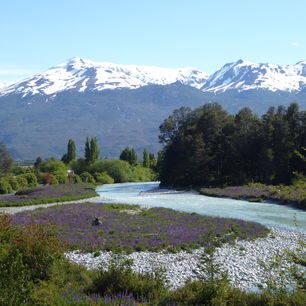 Chili-Parque-Patagonia1_1_430228