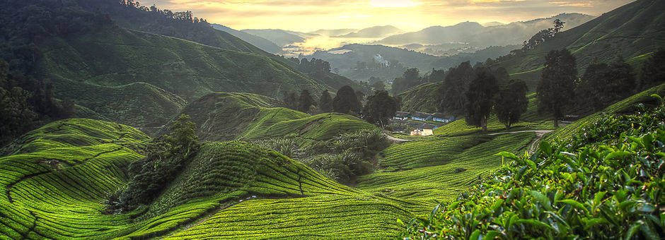 Cameronhighlands-theeplant22(13)