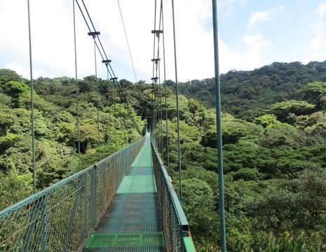 Hanging-Bridge-2(6)