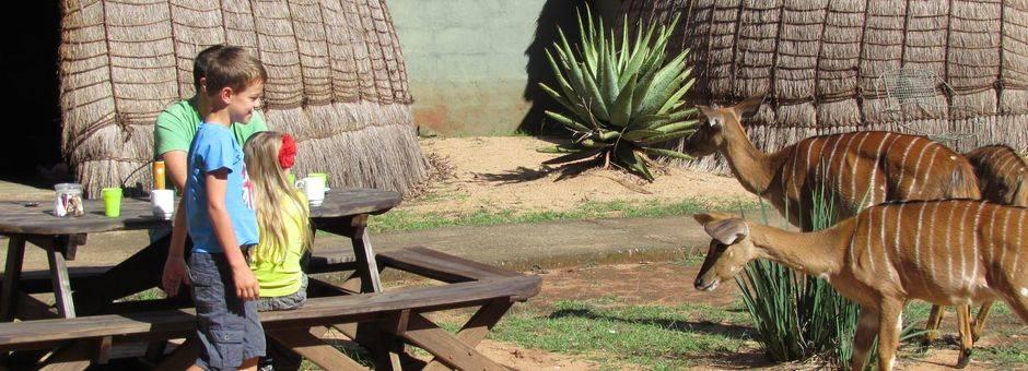 Swaziland-Antilopen-Familie-1