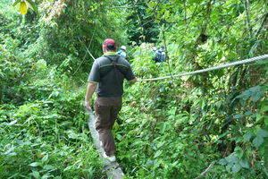 Kota Kinabalu, Junglewandeling op Gaya