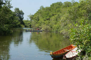 Kanovaren tussen de mangroves