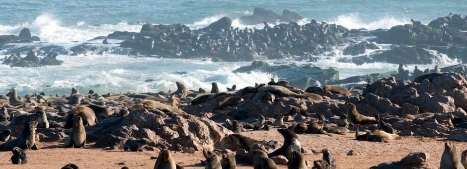 Cape Cross zeehondenkolonie(16)