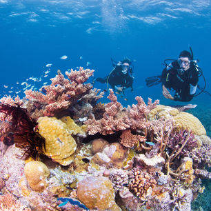 Australie-Great-Barrier-Reef-snorkelen-4_2_557306