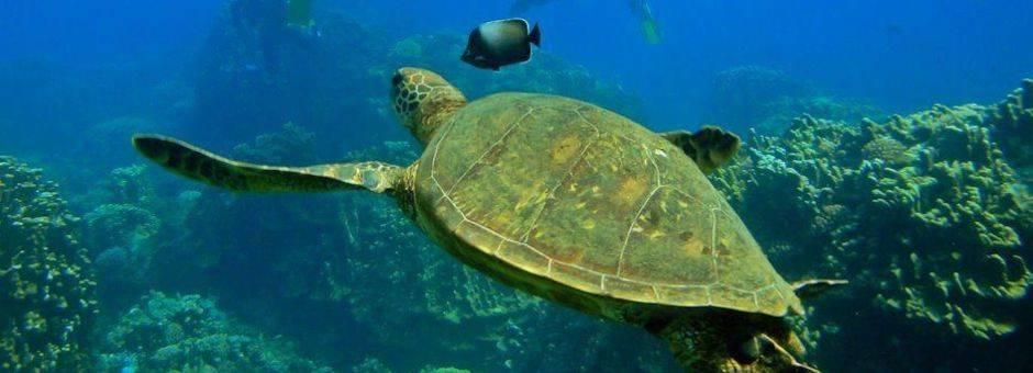 Chili-Paaseiland-onderwaterwereld-1
