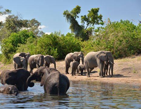 Swaziland-Chobe-NationalPark-olifanten(12)