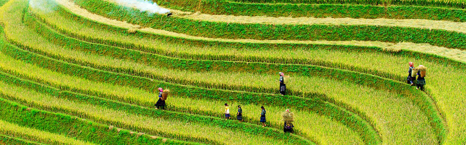 Vietnam rijstveld