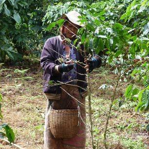 Laos-Bolaven-Platteland