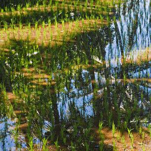 Indonesie-palmweerschijn-water