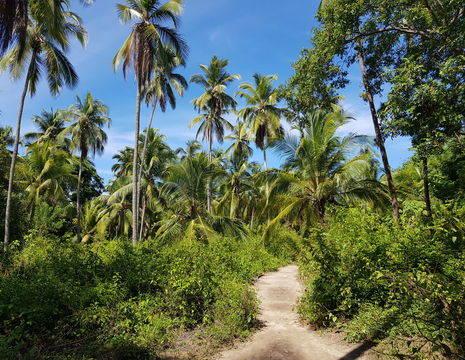 Colombia-TayronaNP-jungle_1_482255