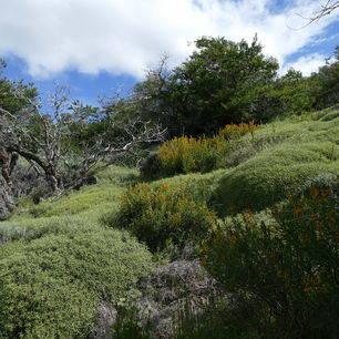 Argentinie-El-Chalten-ongerepte-natuur