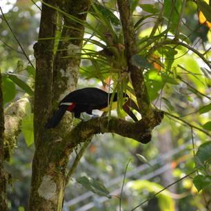 Selva-Verde-Lodge-Birdwatching-tour-27(7)