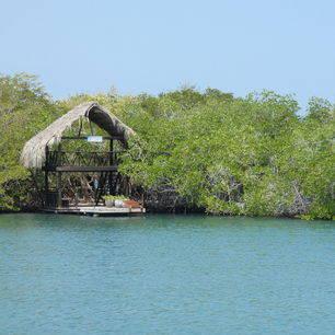 Colombia-Islas-del-Rosario-mangrove