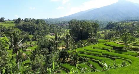 De mooie groene rijstvelden omgeving Nagrak