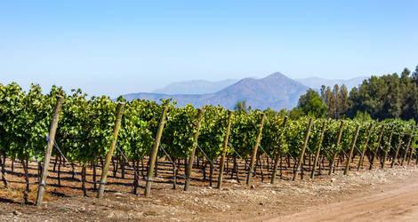 Chili-Maipo-Valley-wijngaarden-2
