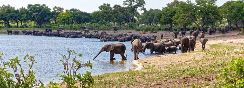 Caprivi Strook Nambwa Tented Camp elephants herd on river2(11)