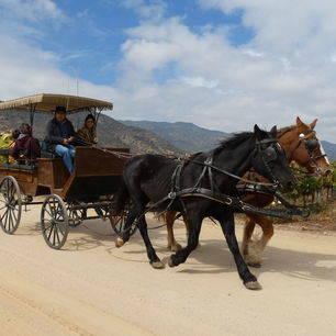 Chili-Colchagua-Vallei-koets-paarden