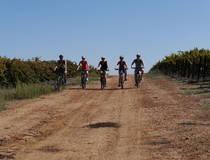 Op de fiets langs wijngaarden