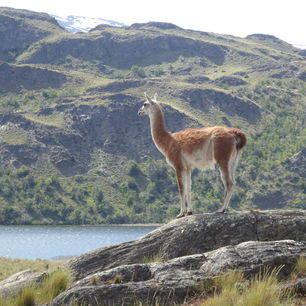 Chili-Parque-Patagonia