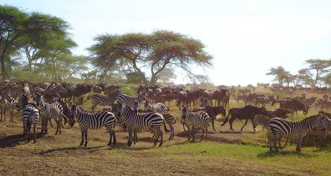 Tanzania-Serengeti-Migratie
