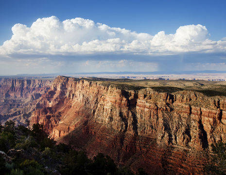 Amerika-Grand-Canyon-Papillon_1_509536
