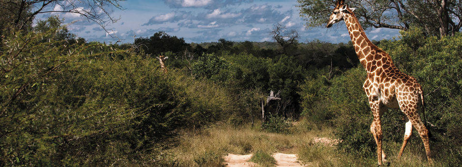 Zuid-Afrika-Safari-84280dc6(11)