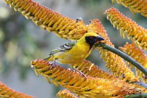 Natuur in Swaziland