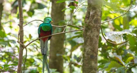 Quetzal-1(6)