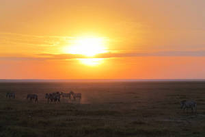 Klimaat Kenia