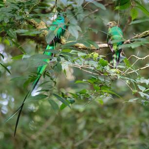 Quetzal-2-Monteverde(6)