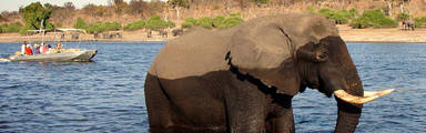 Olifant spotten in Chobe National Park Botswana