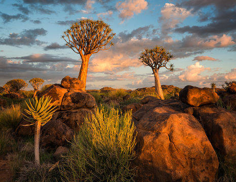 Namibia-QuiverTreeForest(12)