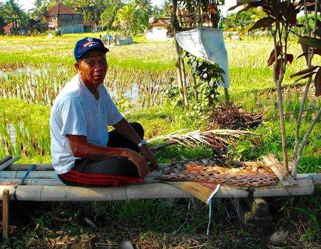 Bali-Ubud-Rijstvelden2