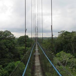 de canopy-brug in de Amazone