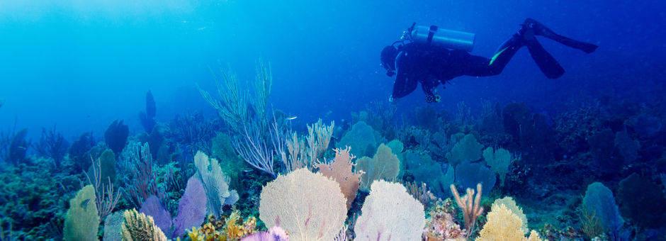Indonesie-Lombok-onderwater56(13)